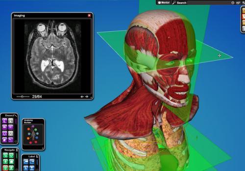 CyberAnatomy VR